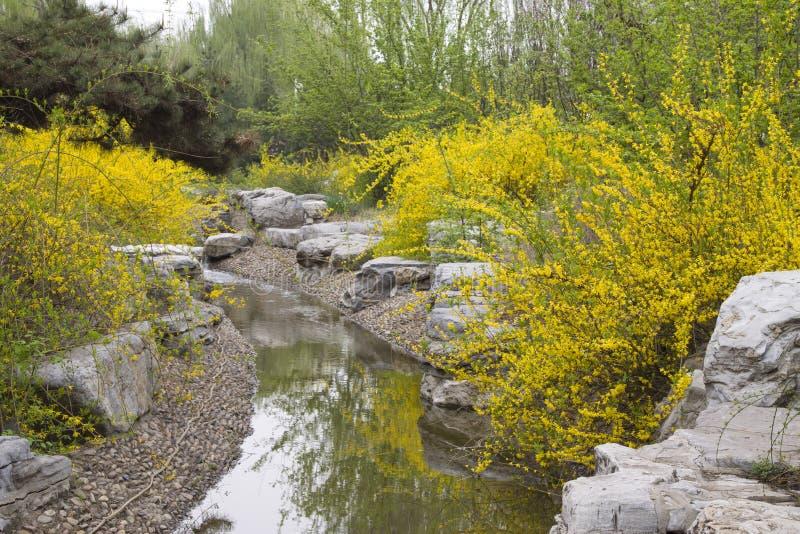 黄色花在庭院,瓷里 免版税库存图片