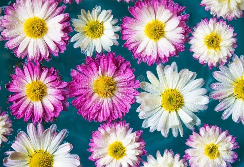 紫色花在蓝色天蓝色的水,自然背景,墙纸中 库存图片