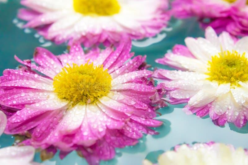 紫色花在蓝色天蓝色的水,自然背景,墙纸中 免版税图库摄影