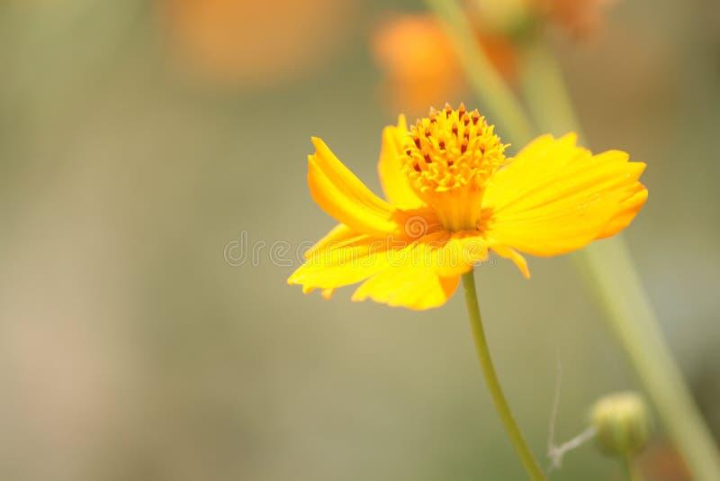 黄色花夏时庭院 库存图片