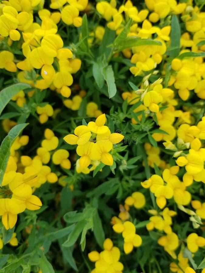 黄色花束 库存照片