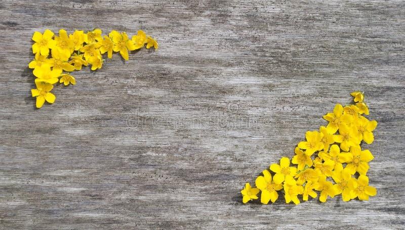 黄色花框架在木背景的 库存图片