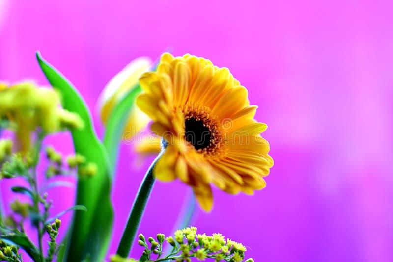 Download 黄色花花束 库存照片. 图片 包括有 其他, 植物群, 浪漫, 蓝蓝, smokey, 叶子, 详细资料 - 87742080