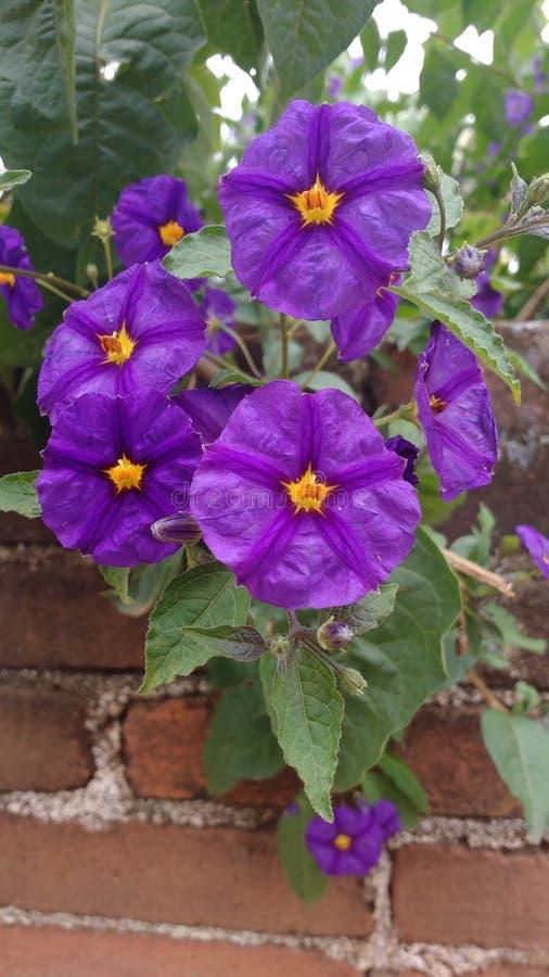 紫色花花束 免版税库存照片