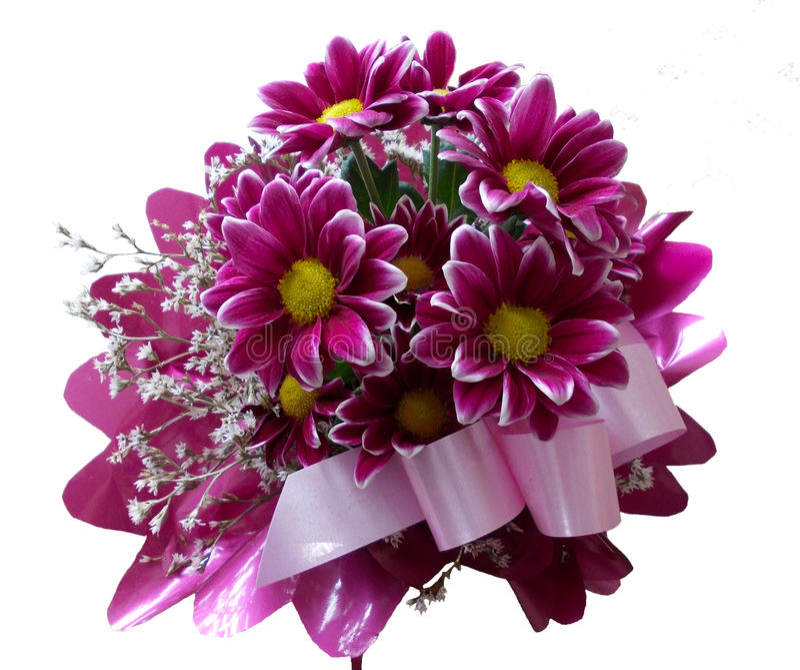紫色花菊花 库存图片