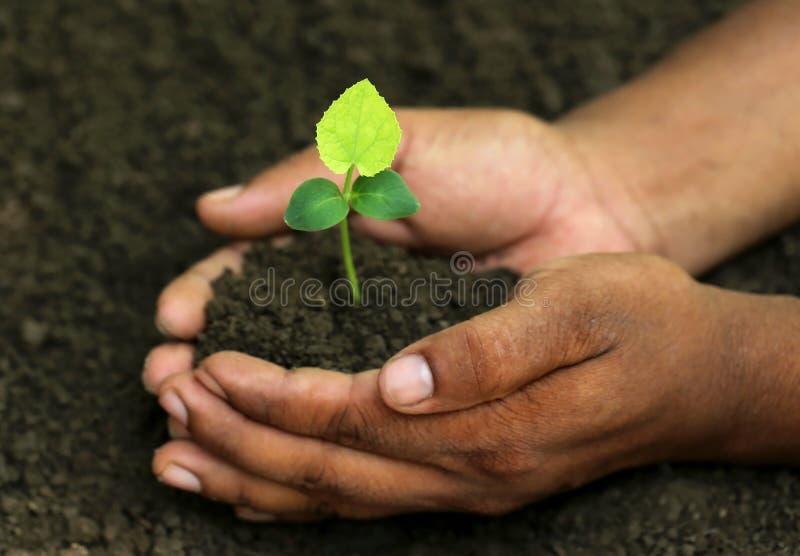 绿色苦瓜属植物 库存图片