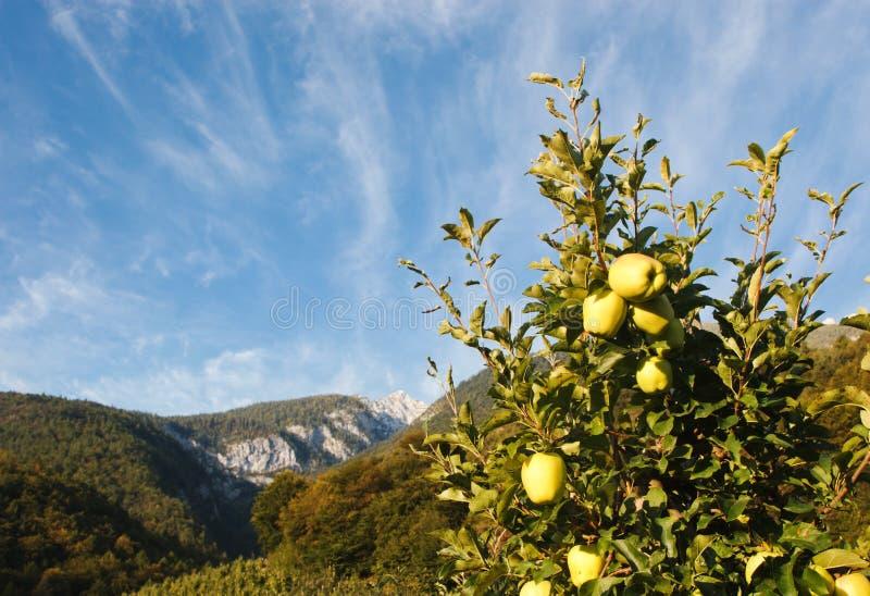Download 绿色苹果计算机背景 库存照片. 图片 包括有 健康, 果子, 对象, 五颜六色, 模式, 营养, 自然, 生气勃勃 - 30338932