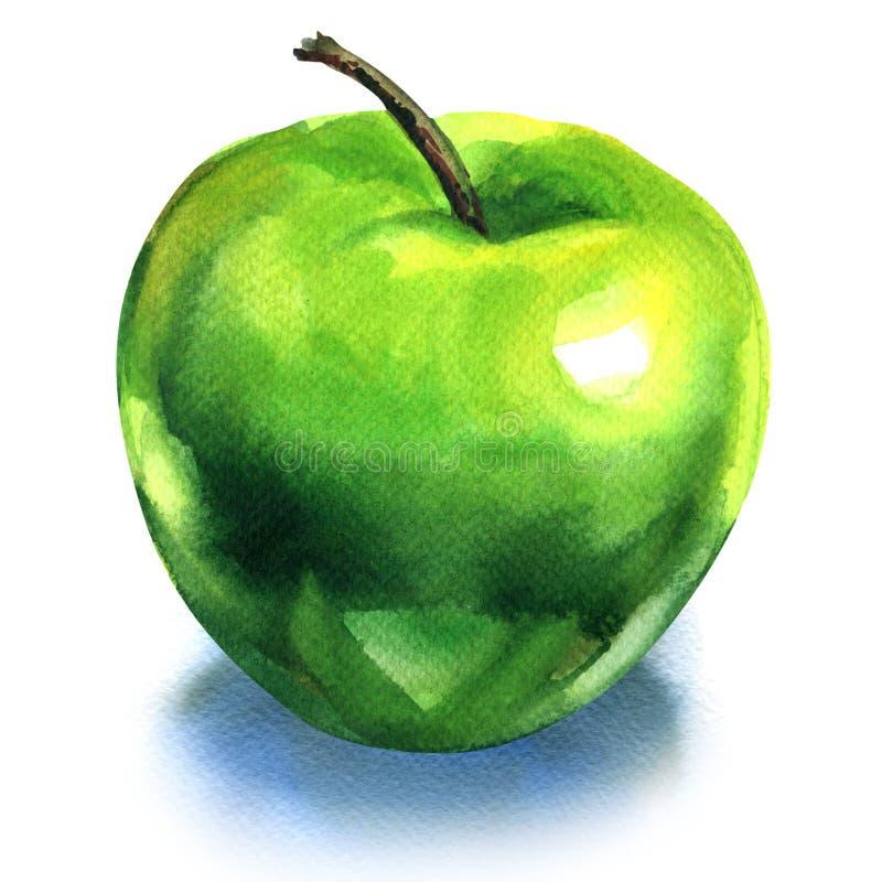 绿色苹果,隔绝在白色背景 库存例证