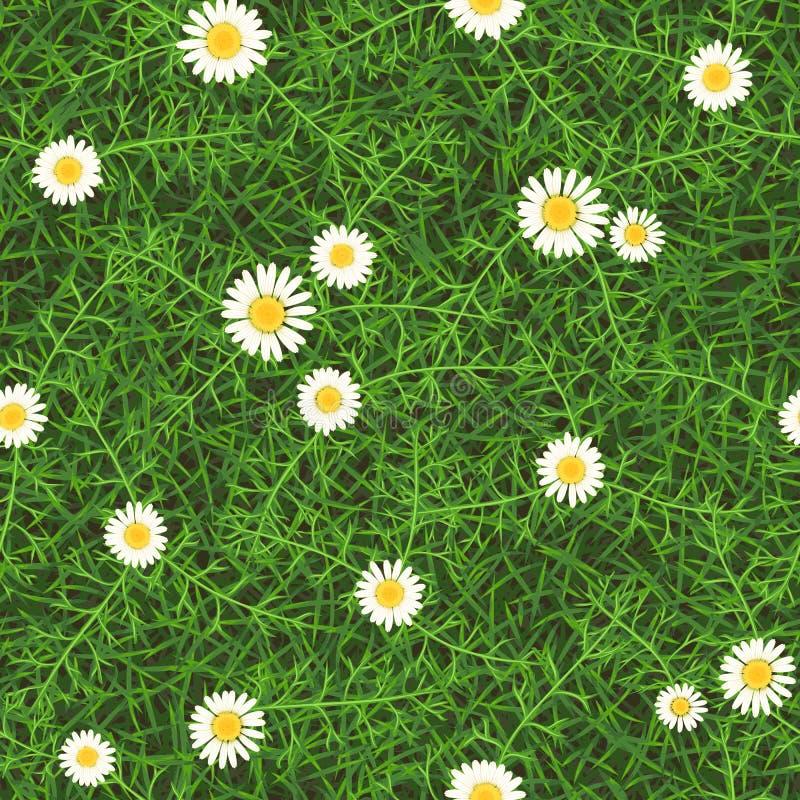 绿色草地早熟禾无缝的传染媒介纹理与雏菊的 库存例证