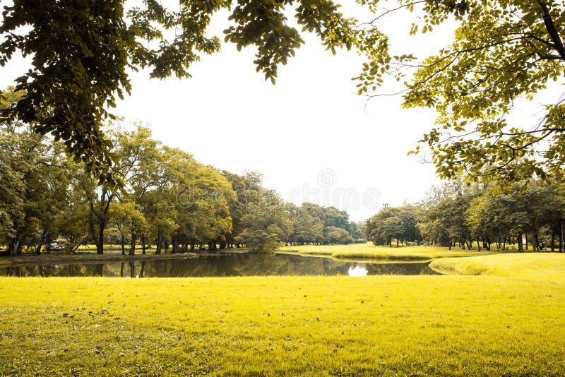 绿色草坪和结构树 库存照片