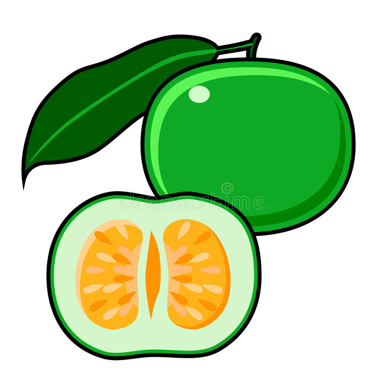 绿色葡萄柚 库存例证