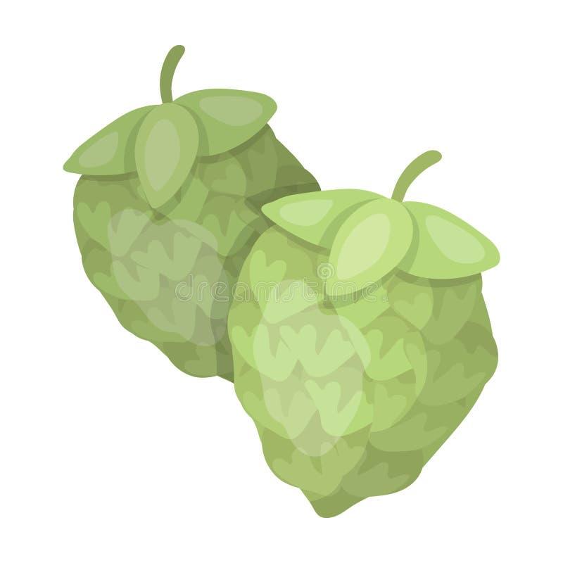 绿色蛇麻草 酿造啤酒的植物 啤酒主要部分  客栈唯一象在动画片样式传染媒介标志库存 库存例证