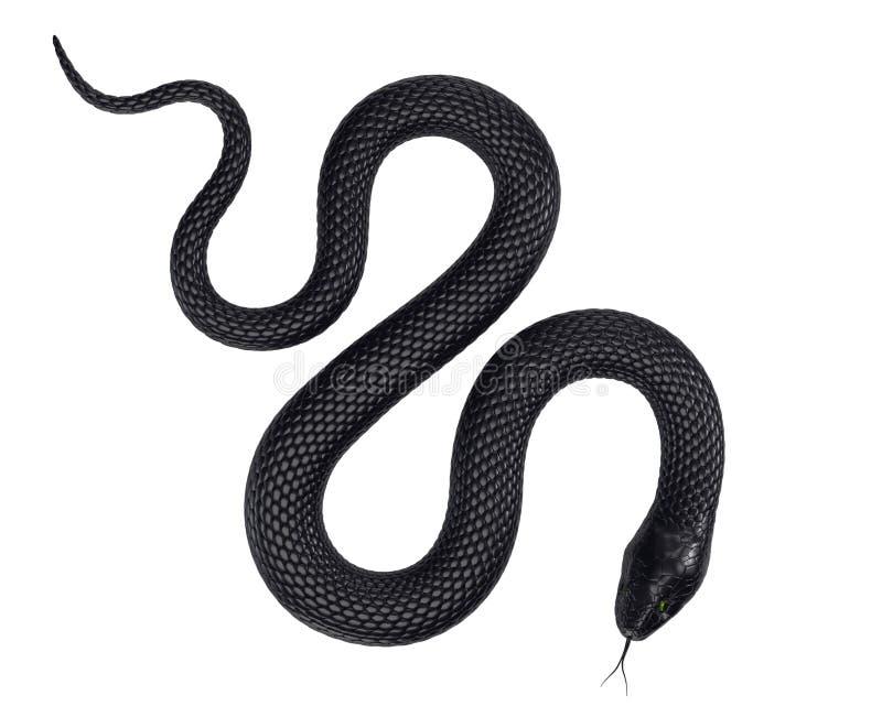 黑色蛇 免版税图库摄影