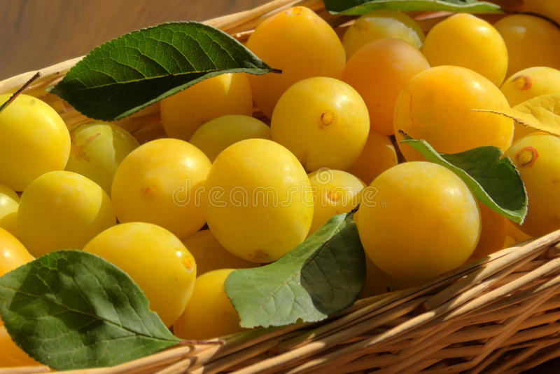 黄色蜂蜜李子 免版税库存照片
