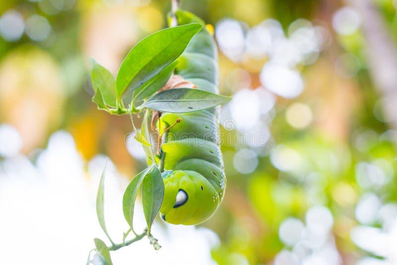 绿色蠕虫 免版税库存图片