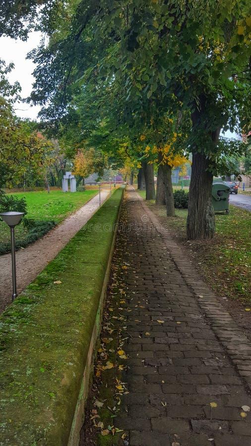 绿色街道 库存图片