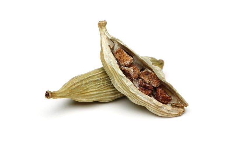绿色豆蔻果实 免版税库存图片