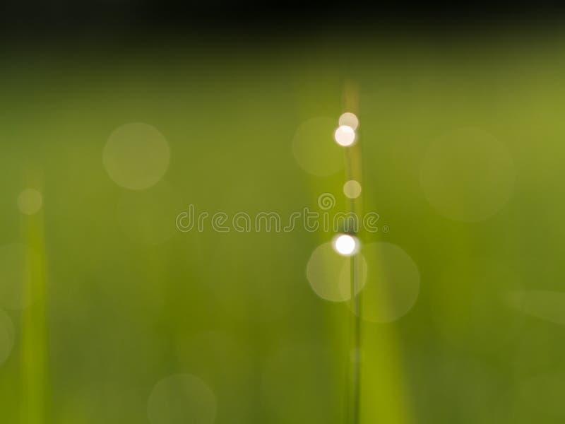 绿色迷离摘要背景 库存图片