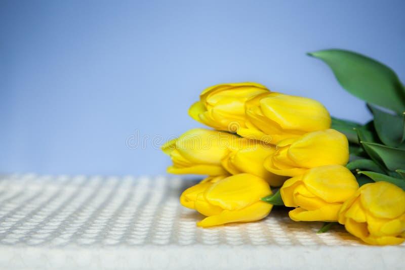 黄色郁金香在与拷贝空间的蓝色背景开花 免版税库存图片