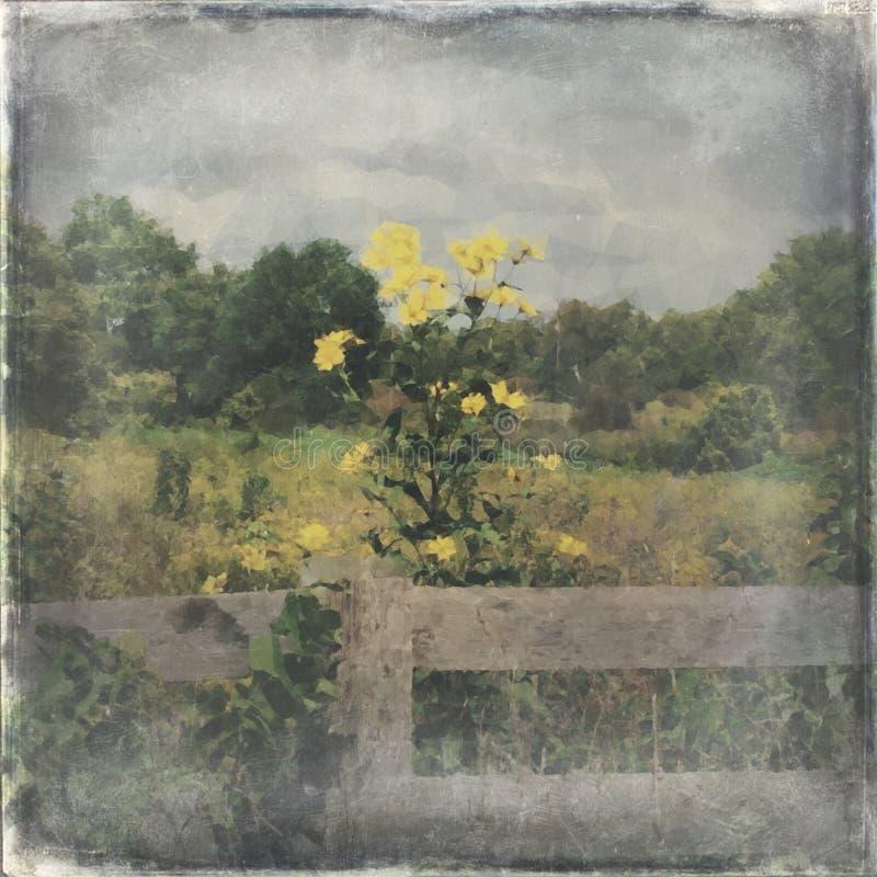 黄色野花在乡下 免版税库存照片
