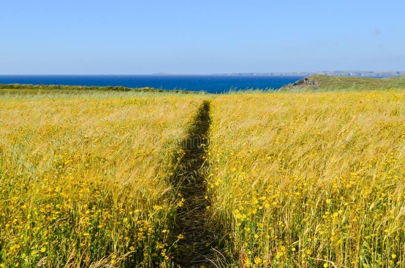 黄色野花草甸由道路切成了两半 免版税库存图片