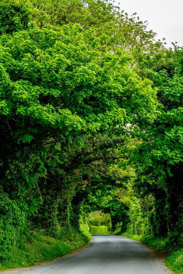 绿色隧道,爱尔兰 免版税库存照片