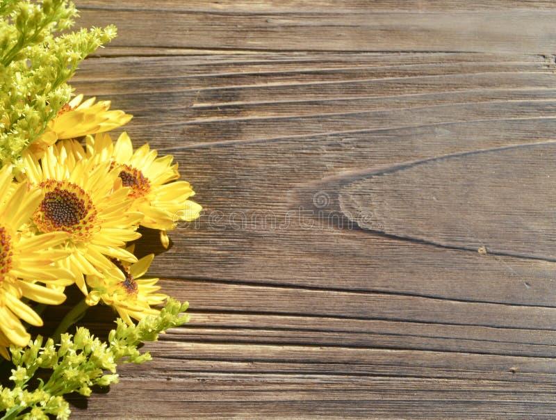 黄色雏菊木头背景 免版税库存图片