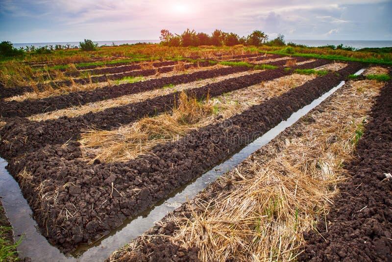 绿色露台的米领域在巴厘岛,印度尼西亚 免版税库存照片