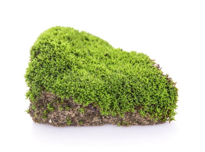 绿色青苔在白色背景的土壤增长 免版税图库摄影