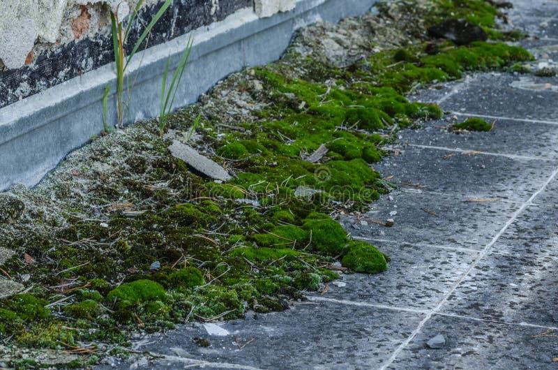 绿色青苔在被放弃的房子里 库存照片