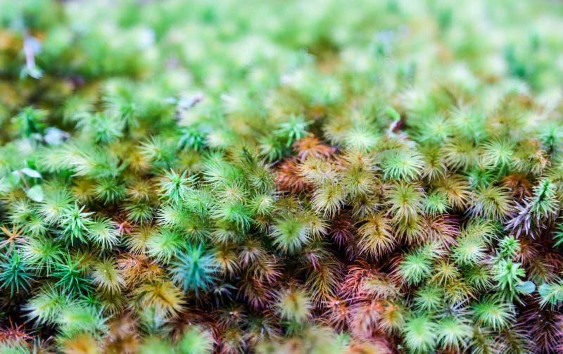 绿色青苔特写镜头种植背景 图库摄影