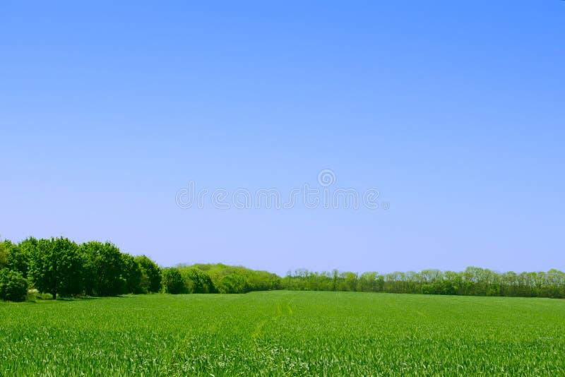 绿色领域、森林和蓝天。夏天风景背景 免版税库存图片