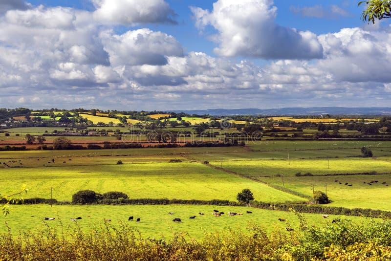 绿色领域农村风景看法,萨利,英国 免版税库存照片