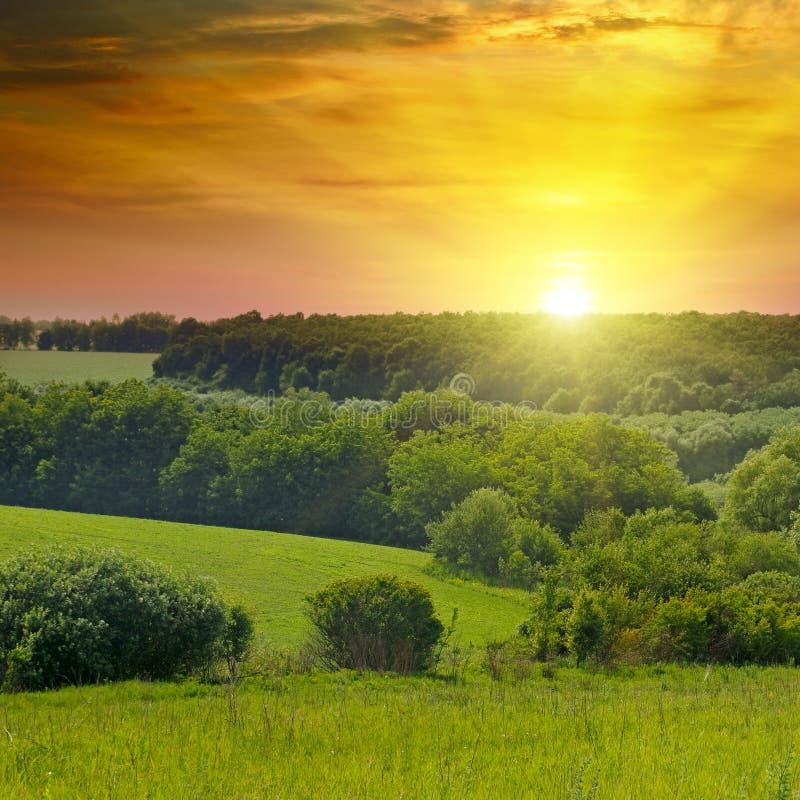 绿色领域和明亮的日出在天际 免版税库存图片