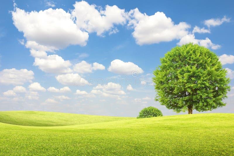 绿色领域和树与蓝天和云彩 免版税图库摄影