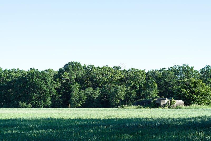 绿色领域和树和蓝天和地堡 免版税库存照片