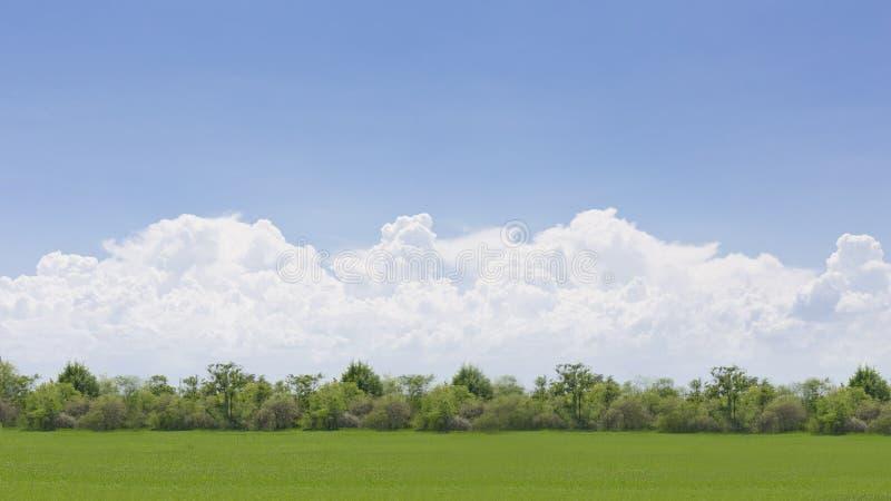 绿色领域和蓝天与大云彩 免版税图库摄影