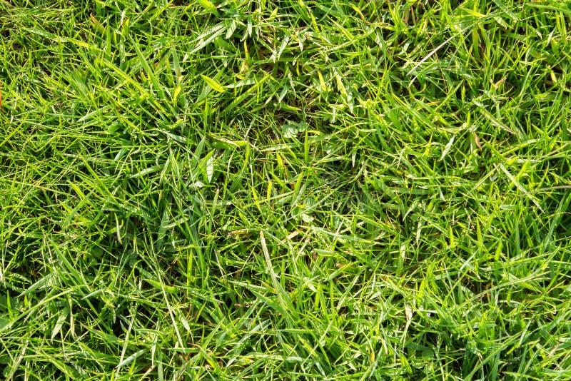 绿色领域草 免版税库存图片