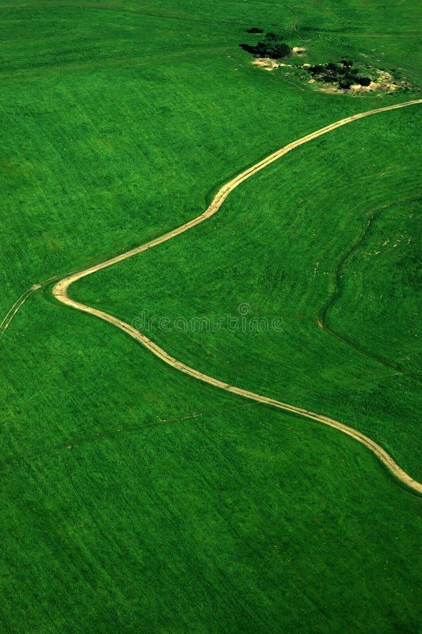 绿色领域道路走的路 免版税库存照片
