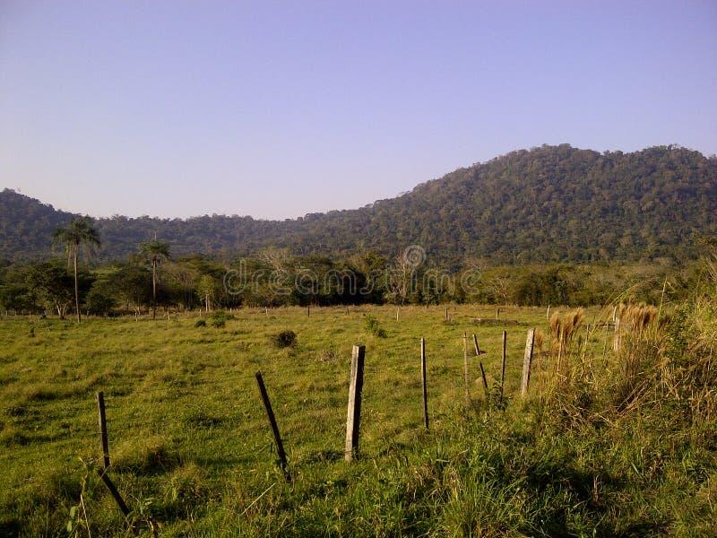 绿色领域,纯净的自然,山天际 免版税库存图片