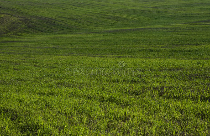 绿色领域 库存图片