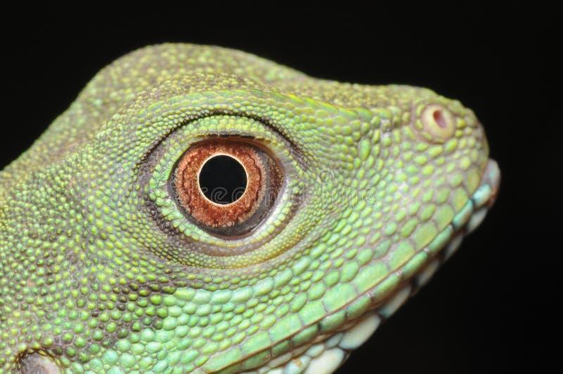 绿色鬣鳞蜥眼睛 免版税库存图片