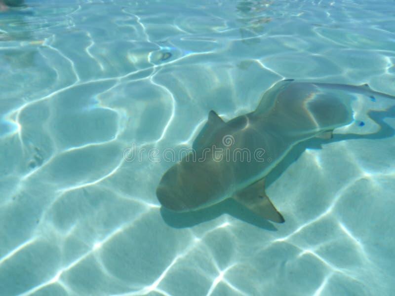 黑色鲨鱼技巧 免版税库存照片
