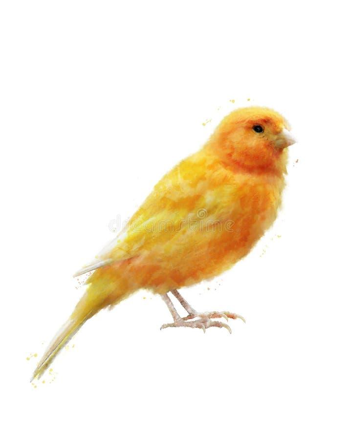 黄色鸟的水彩图象 皇族释放例证