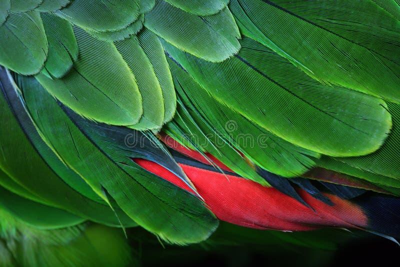 绿色鹦鹉羽毛 库存图片