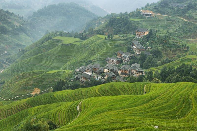 绿色龙脊露台的领域和Tiantouzhai村庄看法  库存图片