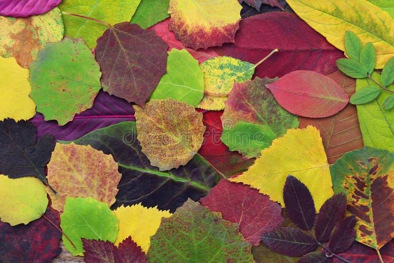 黄色,绿色和红色离开树和其他植物 免版税库存图片