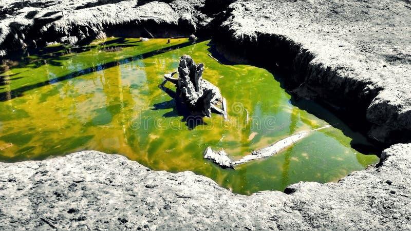 水绿色水坑  免版税库存图片