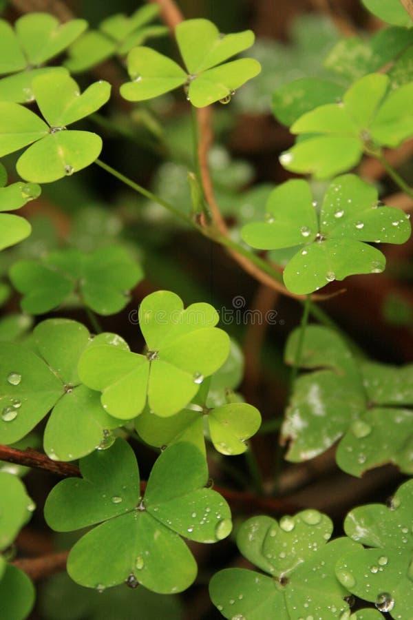 绿色离开与雨珠在阿尔弗莱德尼古拉斯庭院 图库摄影