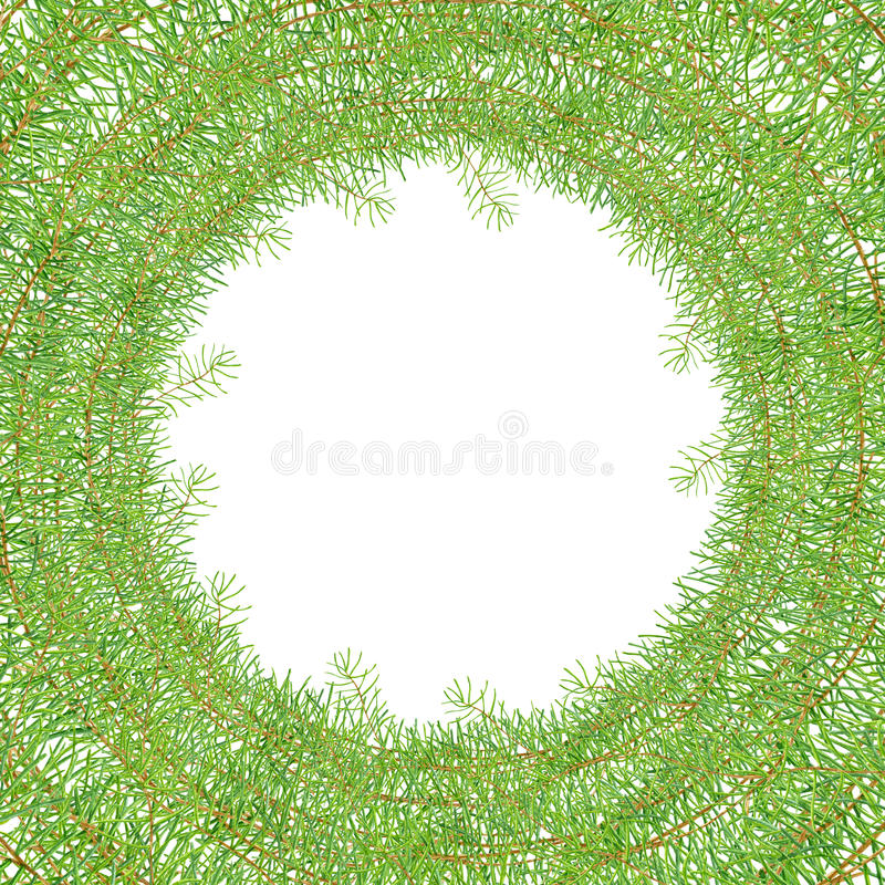 绿色水彩框架杉木分支 库存例证